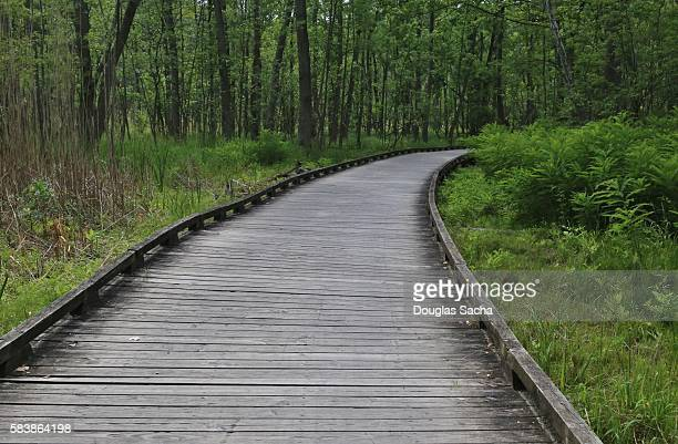 Elevated recreational trail over the wetlands, Cuyahoga Valley National Park, Akron, Ohio
