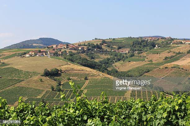 elevated view of a winegrowing village in Beaujolais region