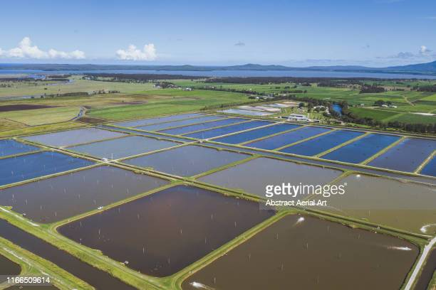 elevated view of aquaculture ponds, new south wales, australia - aquaculture stock pictures, royalty-free photos & images