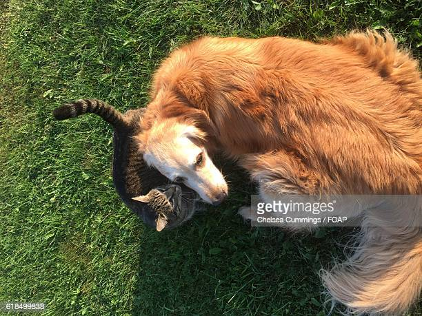 Elevated view of cat and dog on green grass