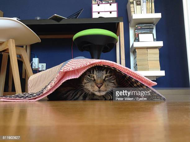 Elevated view of cat hiding under napkin