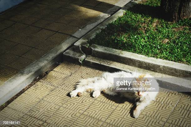 Elevated View Of Cat Sleeping