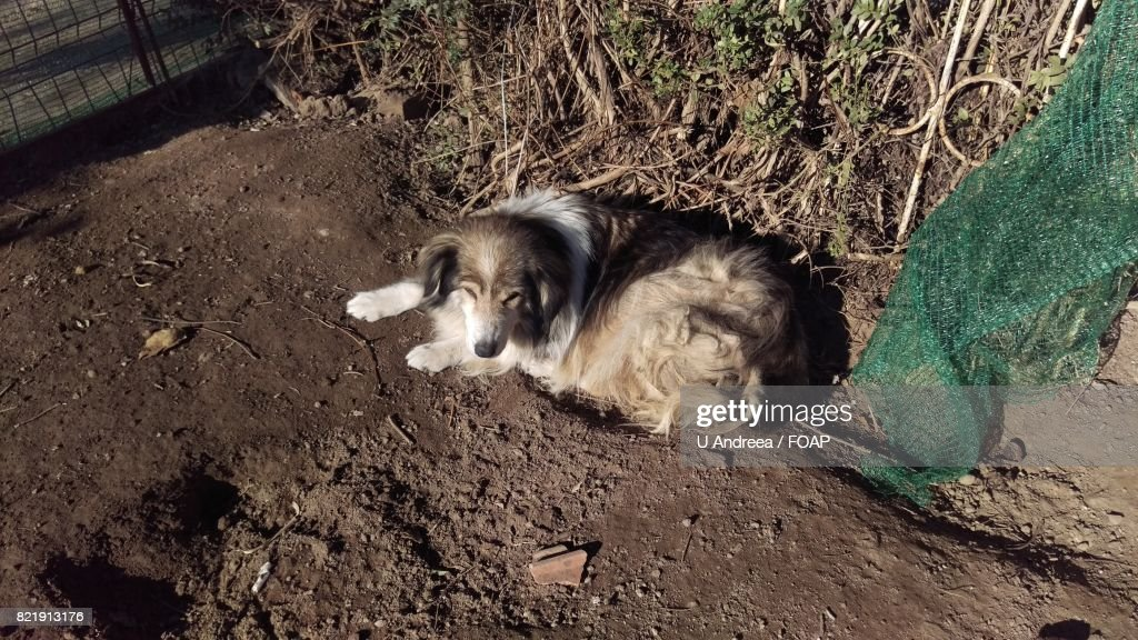 Elevated view of dog lying : Stock Photo