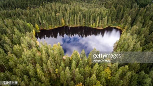 erhöhte sicht auf den wald im herbst - schwarzwald stock-fotos und bilder