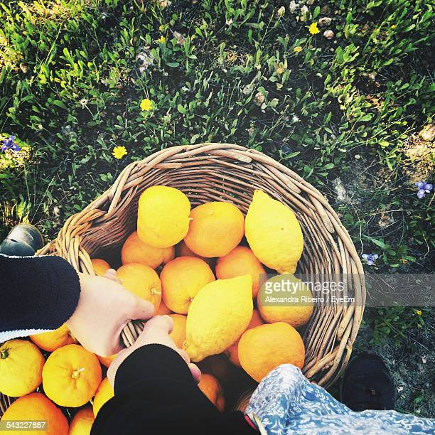 Elevated View Of Hands Holding Basket With Lemons And Oranges