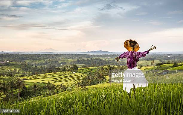 elevated view of jatiluwih rice terraces and scarecrow, bali, indonesia - scarecrow agricultural equipment stock photos and pictures