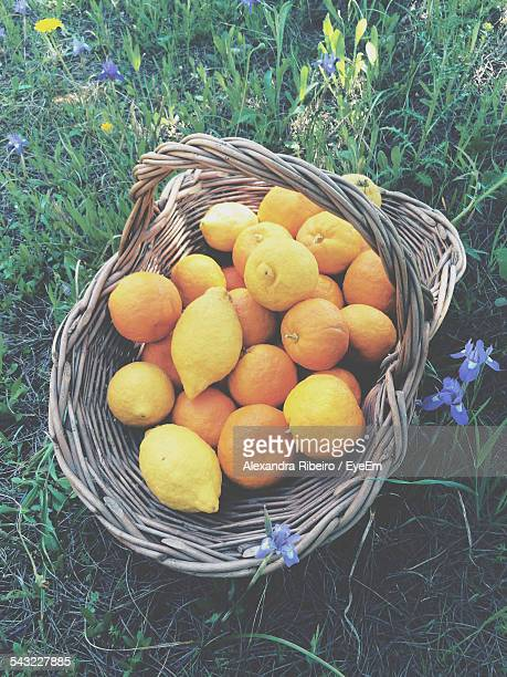 Elevated View Of Lemons And Oranges In Basket