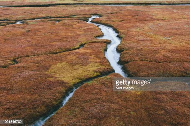 elevated view of marsh and tidelands at dusk in a national seashore reserve. - nature reserve stockfoto's en -beelden