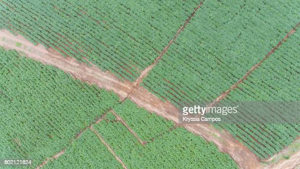 Elevated View of  Potato Fields