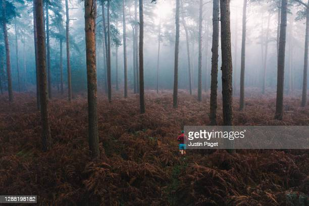 elevated view of runner in misty forest - one mid adult man only stock pictures, royalty-free photos & images
