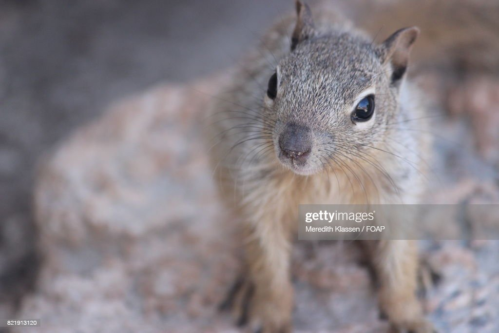 Elevated view of squirrel : Stock Photo