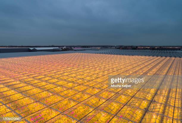 elevated view of the landscape between rotterdam and the sea, with huge glasshouses lit by a mix of pink and white led lighting for maximum growth. - between stock pictures, royalty-free photos & images