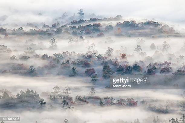 Elevated view of trees in fog at sunrise