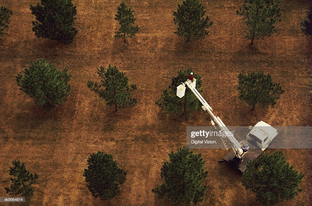 Elevated View of Two Men on a Cherry Picker, Pruning Trees : Stock Photo