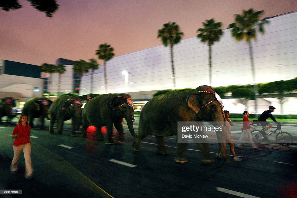Eleven Asian elephants and seven horses walk past the