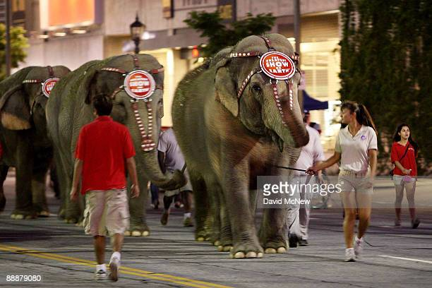 Eleven Asian elephants walk to the Staples Center hours before a memorial service for recently deceased singer Michael Jackson is to take place at...