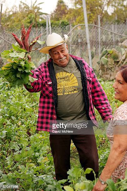 Elia Ortiz holds up radishes and his wife Magalena laughs as he tends his garden plot at the South Central Community Farm on March 9 2006 in Los...