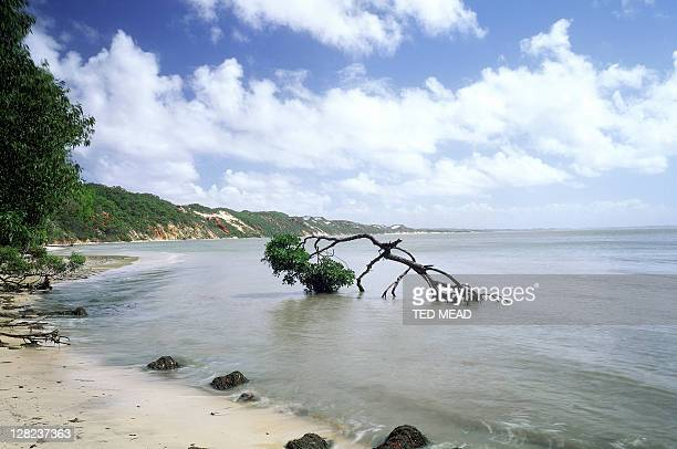 elim beach, cape york peninsula, queensland, australia - peninsula stock pictures, royalty-free photos & images