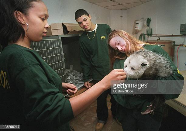 Elisa Sequeira feeds Stoughton the opossum at the Franklin Park zoo She is a Teen Ambassador in the City Access Program along with Theodore Brantley...