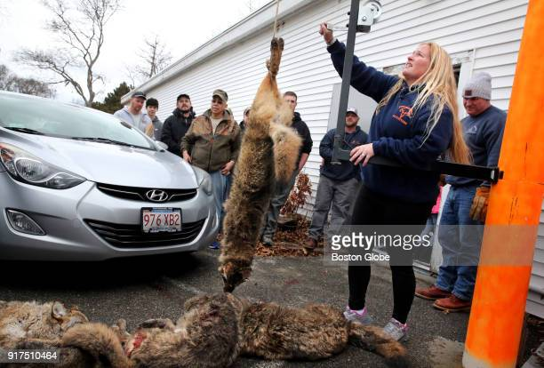 Elise Costa of Powderhorn Outfitters weighs coyotes outside the shop in Hyannis MA on February 10 2018 About 75 picketers lined both sides of the...