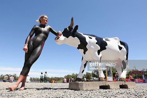 Elite Triathlete Rebekah Keat of Australia poses with a cow before a training swim in the lead up to Challenge Shepparton on November 14 2015 in...