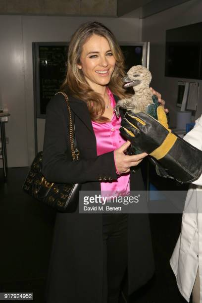 Elizabeth Hurley attends the launch of Dinosaurs in the Wild at Greenwich Peninsula on February 13 2018 in London England