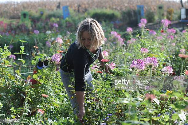 Elizabeth King picks flowers in the garden at her mother Lisa's home in Butler PA on October 15 2013 The Kings are stars of the reality program Farm...