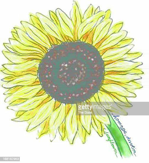 Elizabeth Landt color illustration of a sunflower The State /MCT via Getty Images