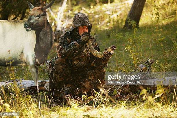 elk bowhunter using elk decoy - animal call stock pictures, royalty-free photos & images