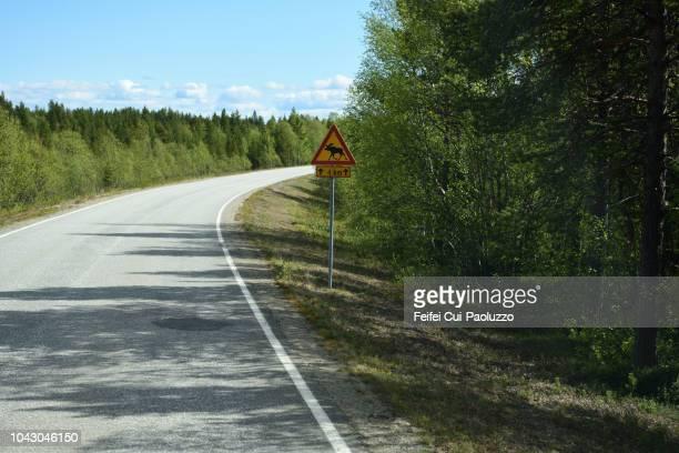 Elk crossing on the road near Inari, Finland