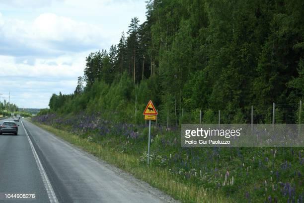Elk crossing sign on the roadside near Tampere, Finland