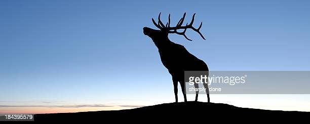 xl elk silhouette - bugle stock pictures, royalty-free photos & images