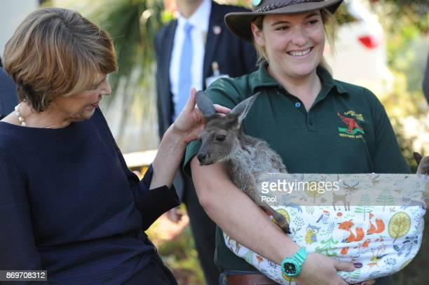 Elke Büdenbender seen with baby kangaroo 'Nicholas' as she visits Kings Park with her husband President of the Federal Republic of Germany...