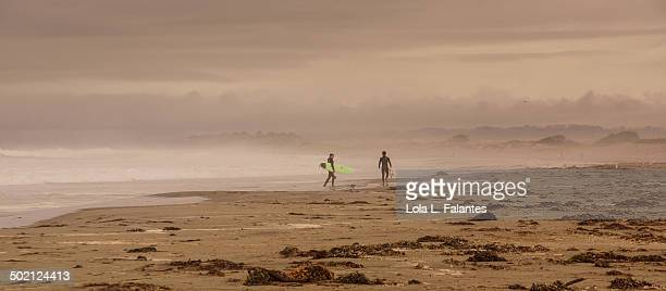 Elkhorn Slough beach