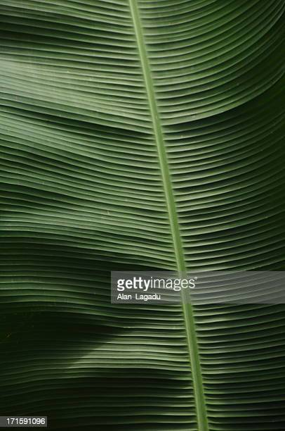 ella,hill country, sri lanka. - banana tree stock pictures, royalty-free photos & images