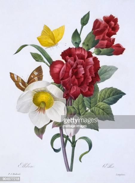 Ellebore et Oeillet from Choix des plus belles fleurs pub Paris 1829