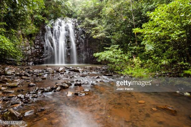 ellinjaa falls, atherton tableland, queensland, australia - atherton tableland stock pictures, royalty-free photos & images