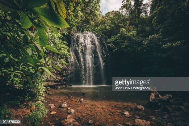 ellinjaa falls tablelands - cairns stock photos and pictures