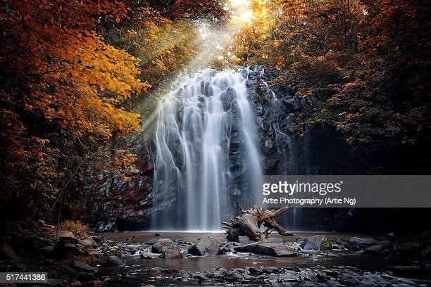 Ellinjaa Falls, Wooroonooran National Park, Millaa Millaa, Atherton Tablelands, Far North Queensland, Australia