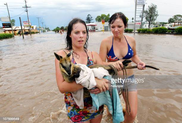 Ellisha Johnston and Sarah Gilbert rescue a Wallaby that they found struggling against floodwaters in the town of Dalby in Queensland after...
