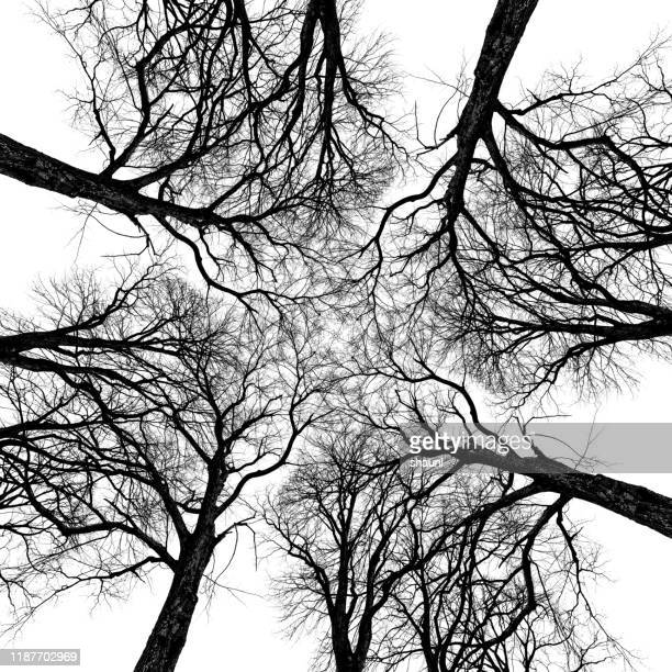 elm tree abstraction - radial symmetry stock pictures, royalty-free photos & images