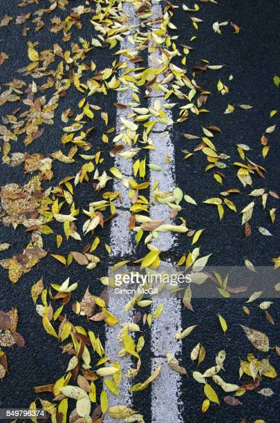 elm tree leaves on a suburban road during autumn in canberra, australian capital territory, australia - elm tree stock pictures, royalty-free photos & images