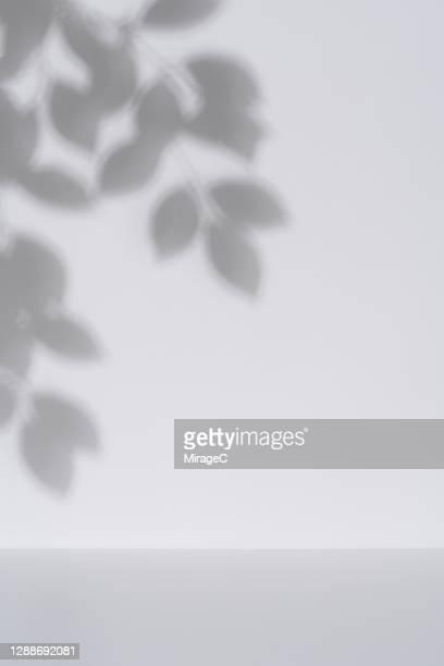 elm tree leaves shadow on white wall backdrop - 陰 ストックフォトと画像