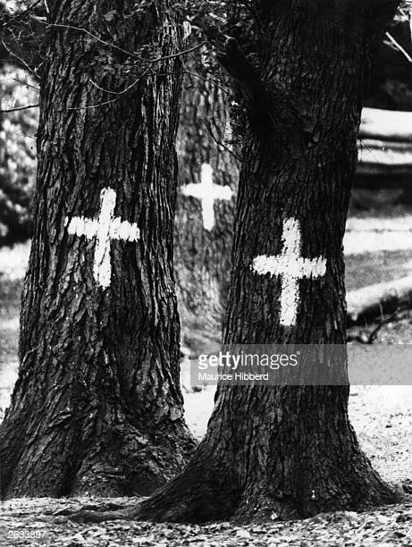Elm trees in Richmond Park that have unfortunately succumbed to the Dutch Elm Disease are marked with a white cross for felling