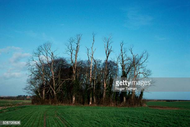 elms damaged by dutch elm disease - dutch elm disease stock pictures, royalty-free photos & images