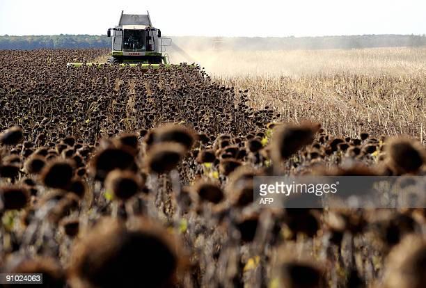 """Eléonore DERMY """"Les terres russes, nouvel eldorado pour les investisseurs étrangers"""" Recent picture of farmers harvesting sunflower on a land outside..."""