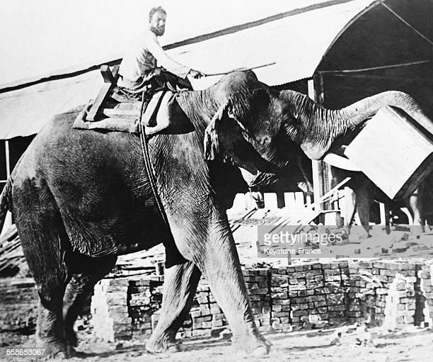 Eléphant utilisé pour le transport du bois de teck à Rangoon Birmanie circa 1930