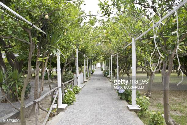 Elsa Morante gardens with the Procida's celebrated lemons on June 12 2012 in Procida Italy