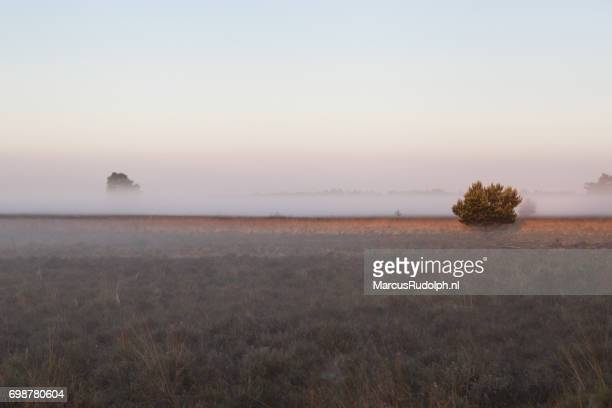 elspeetse heide in de mist - zonsopgang stock pictures, royalty-free photos & images