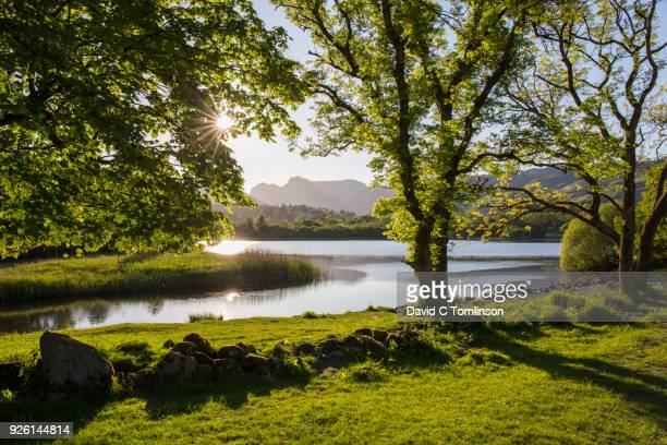 elter water and the langdale pikes, elterwater, lake district national park, cumbria, england, uk - riverbank - fotografias e filmes do acervo